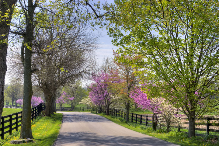 Kentucky horse country road in springtime